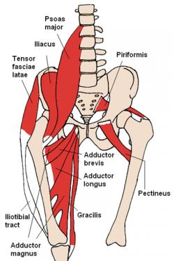Iliopsoas Syndrome