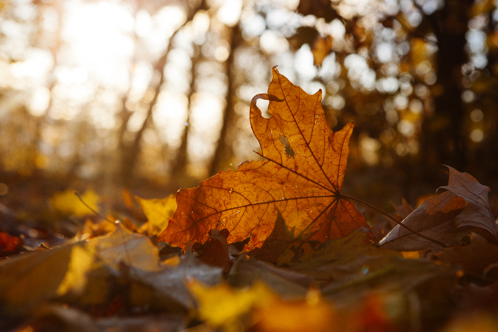 fall leaves showing beauty of impermanence